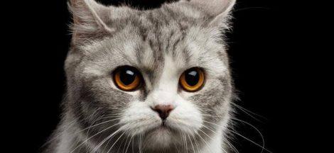 Puisi Tentang Kucing